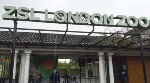Fire damages café at London Zoo