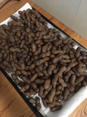 Boiled peanuts drying on paper towel lined cookie sheets
