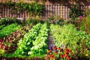 5 Reasons to Start Your Own Vegetable Garden