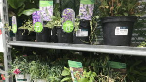 Identifying Healthy Plants for Purchase in Your Garden Cente…