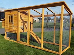 Chicken Coop Construction – Why You Need Well Thought Out P…