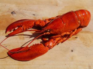 The Health Benefits of Lobster