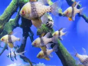 Types Of Tropical Fish For Building A Tropical Fish Aquariu…