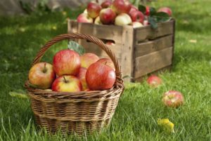 Apple Recipes For Fall Apple Picking