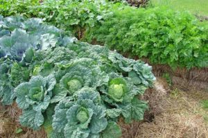 You Can Grow Plants and Vegetables Quickly and Easily Almost Anywhere…