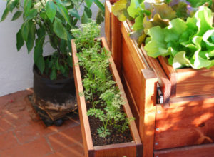 Vegetable Container Gardening – Can You Grow Just Any Vegetables in Containers.