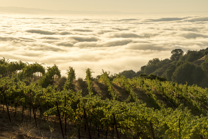Ridge Vineyards, Monte Bello