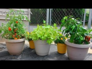 Organic Container Gardening – Simple and Easy Ways to Grow Vegetables and Fruit.