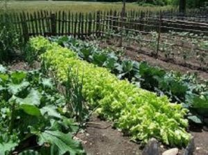 Benefits of Growing a Home Vegetable Garden