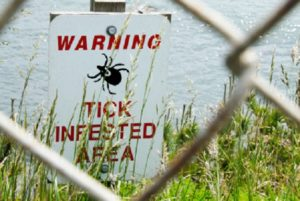 Chronic Lyme Disease – Metaphysical and Spiritual Aspects