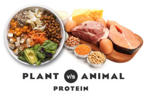 Benefits of Plant-Based Proteins Versus Animal-Based