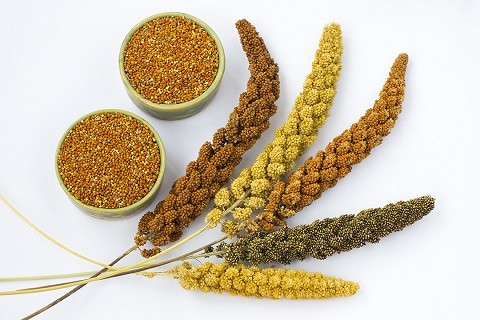 Is a Full Fledged Millets Diet Good For You?