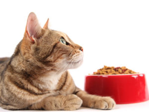 What You Need to Know About Cat Food