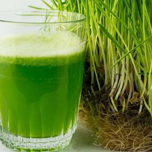 Wheatgrass Health Benefits – What's in Wheatgrass and What Health Benefits Does it Have?