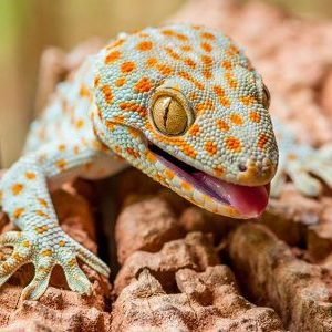 5 Nutritious Foods for Your Tokay Gecko
