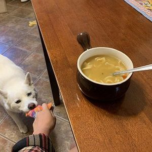 When you want to eat soup but your dog keeps wanting to play