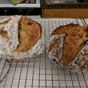 Barley Bread (sourdough) | The Fresh Loaf