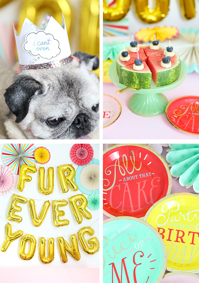 A Fresh Fruit Cake for Puppies